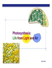 APPhotosynthesis13