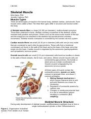 skeletal muscle notes.docx