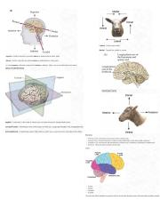Brain Structures and Labels