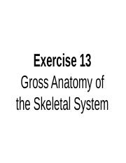 A&P I LAB - EXERCISE 13A (AXIAL MUSCLES).ppt