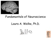 Welke.Fundamentals_of_Neuroscience.311
