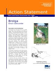 Brolga_Grus_rubicunda_accessible.doc