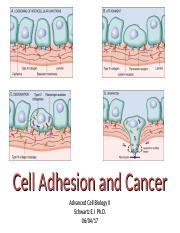 Cell_Adhesion and cancer_with notes_on line