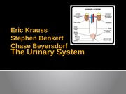 The_Urinary_System_Powerpoint