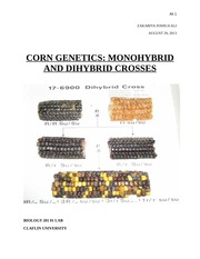 corn cob genetics lab report
