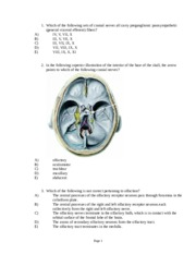 Chapter 9- Cranial Nerves