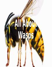 All About Wasps