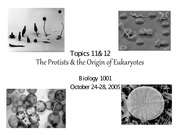 11.0 and 12.0 Protists October 24, 2005