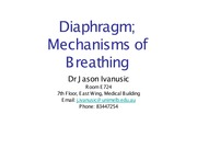 2.1 ANAT30008 Mechanisms of Breathing_Diaphragm 4_8_14