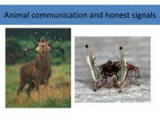 Animal communication and honest signals_Sep21Notes
