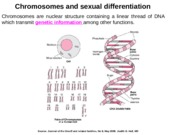 Lecture 1 - Sex Differentiation -Jan 8 2015