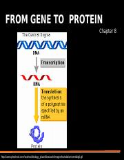 08S From Gene to Protein.ppt
