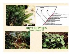 Lecture_6_Bryophytes_BIO2137_2016