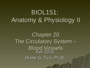 Chapter 20 - The Circulatory System - Blood Vessels.ppt