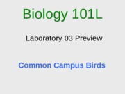 lab 03 preview Campus Birds