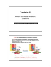 CHEM 4511_6501_Translation_Inhibition_Note