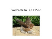Introduction to Biology 105 PPT