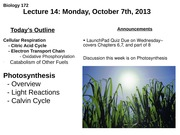 Lecture 14: Cellular Respiration
