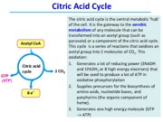 Lecture 20  21 Citric Acid Cycle - class