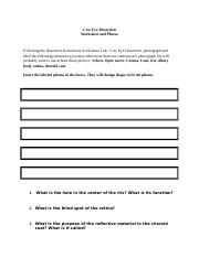 bio 1371 cell structure worksheet 1 list the cell structures visible in the 400x onion root. Black Bedroom Furniture Sets. Home Design Ideas