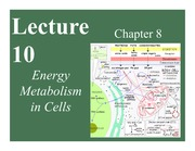 Lecture 10_Energy Metabolism