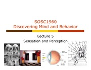 Lecture 5 Sensation and perception_posting