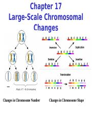 Chapter 17 Large-Scale Chromosome Changes.ppt
