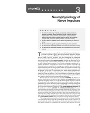 neurophysiology of nerve impulses essay