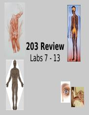203 Labs 7-13 Review PP.ppt