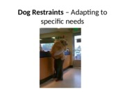 06 Dog Restraints – Adapting to specific needs
