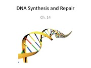 Ch 14 DNA Synthesis and Repair