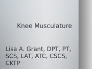 knee muscles presentation