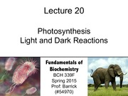 Lecture-20 - Photosynthesis