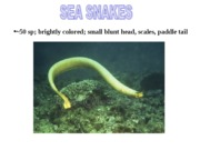 Sea Snakes Project Presentation