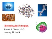 Week 3 _Biomolecular Principles and Nucleic Acids_Jan 22_2014