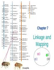 07 Linkage & Mapping