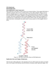 DNA Replicatio6