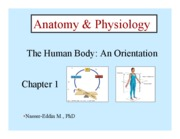 the_human_body