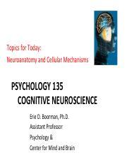 Blog archives dagorflyer cognitive neuroscience banich 3rd edition pdf fandeluxe Images
