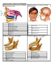 Chapter 7 - Labeling Nasal Conchae, Sinuses and Mandible