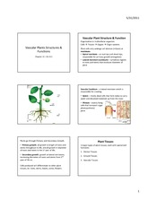 Vascular Plants Structures & Functions