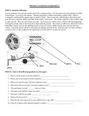 protein-synthesis-worksheet (3).doc