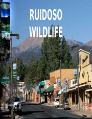 Ruidoso, nm wildlife.pptx