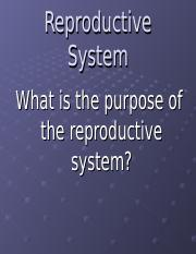 The Female Reproduction System (3)