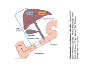 food science and gastroinstestinal physiology - 00123