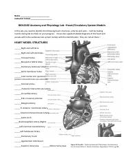 Heart and Circulatory System Models