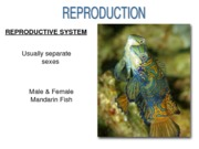 Fish Reproduction Test Notes