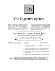 Digestive System Study Guide