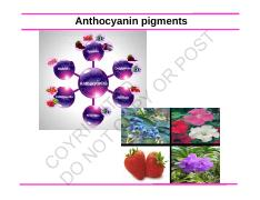2017 updated anthocyanins betalains