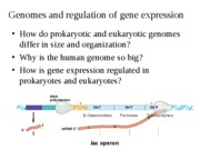 Genomes_gene_regulation_2008